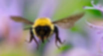 Bee-large4m.jpg