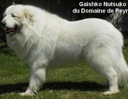 Gaisko-Duponchel_0.jpg