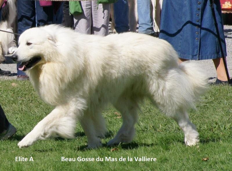 Beau Gosse du Mas de la Valliere