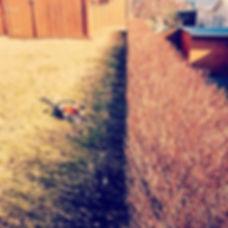 Vetrarklippingar í gangi! Rétti tíminn er núna! #stihl #stihliceland #stihlísland #pruningseason #pr
