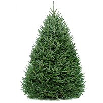 Birmingham Alabama Christmas Tree Lot