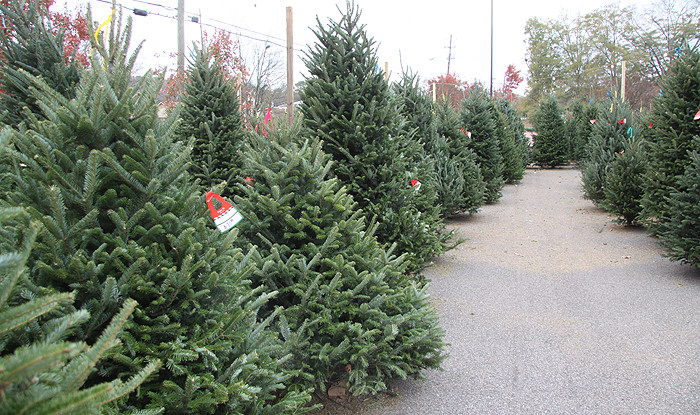 Fresh Christmas Tree Lot Birmingham