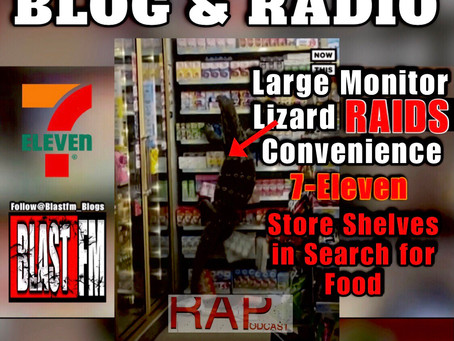Large Monitor Lizard Raids Convenience Store Shelves in Search for Food