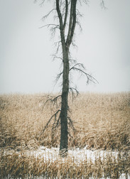 Winter_Ellsworth-8.jpg