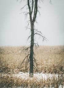 Winter_Ellsworth-8.jpg