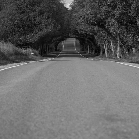 TunnelOfTrees.jpg
