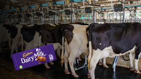 Cadbury's launch a 'plant milk chocolate' option but won't ditch dairy