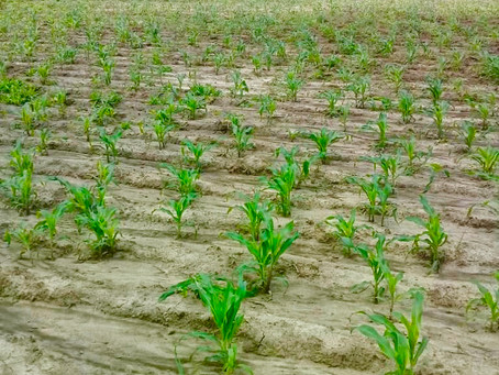 Farming Grant Initiative Update!
