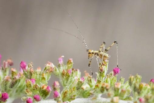 Now look at what katydid