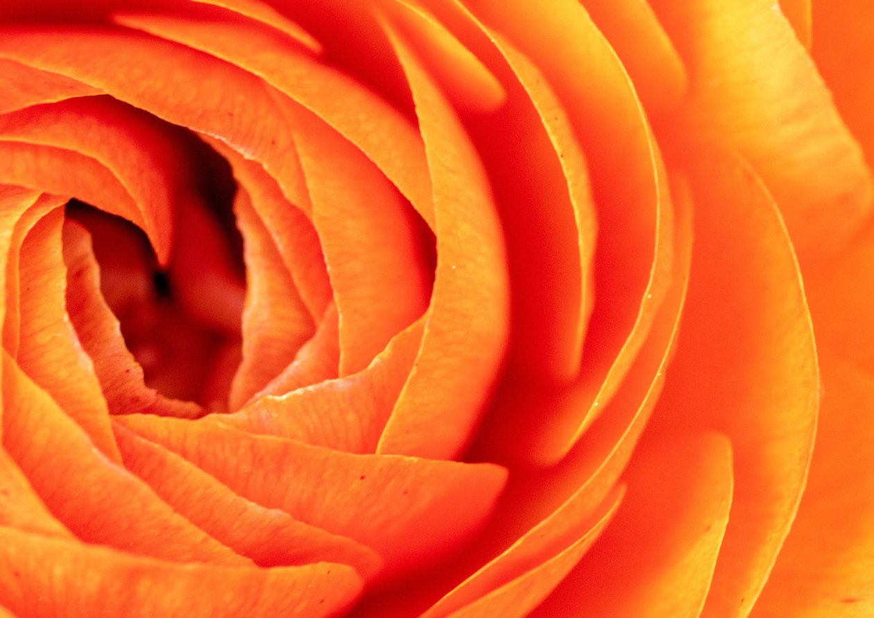 Don't Be Ranunculus