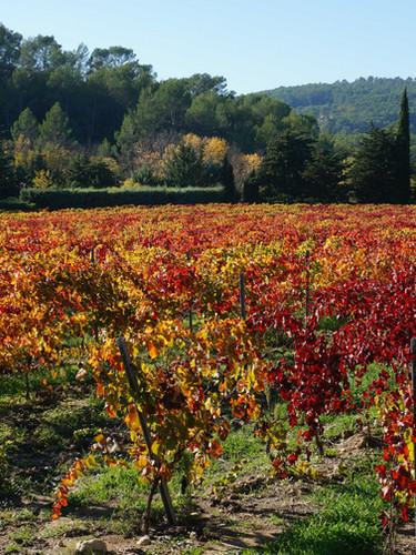 Harvest in Lorgues