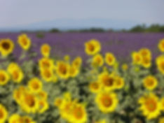 Art by Wietzie is painting en-plein air in Provence