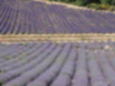 Paint the lavender fields en-plein air in Provence, France
