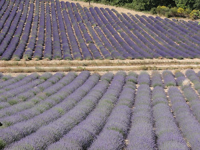 Paint the lavender fields en-plein air in Provence, France