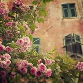 Painting pink and white roses in Provence, France with Wietzie