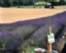 Art vacations in Provence, painting lavender fields en-plein air with Wietzie