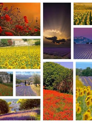 Provence landcapes