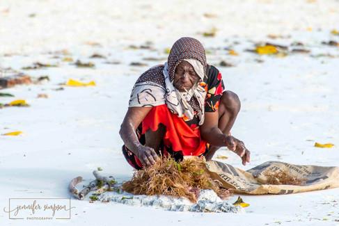 Zanzibar 015.JSP lrs.jpg