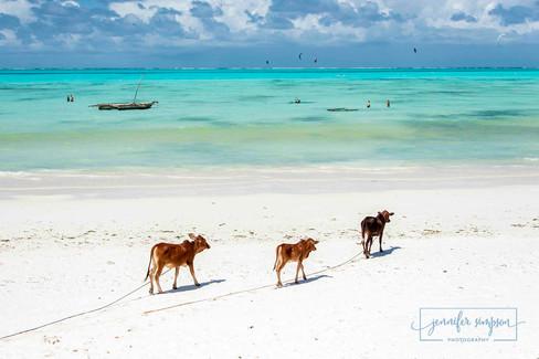 Zanzibar 042.JSP lrs.jpg