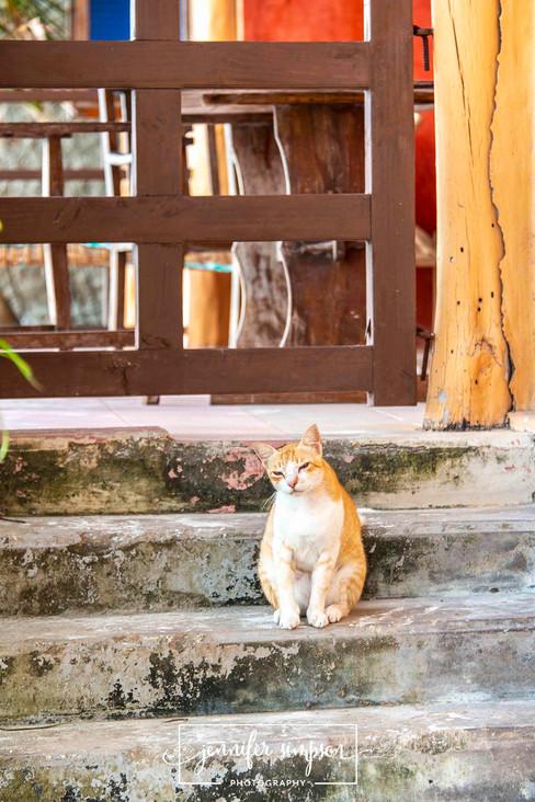 Zanzibar 016.JSP lrs.jpg