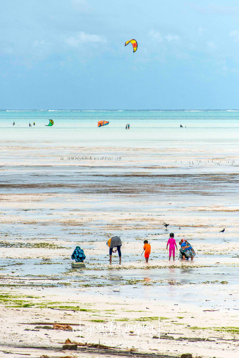 Zanzibar 024.JSP lrs.jpg