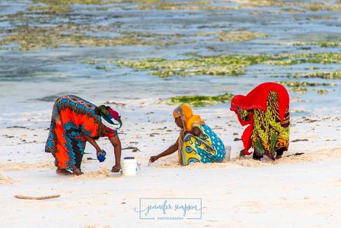 Zanzibar 037.JSP lrs.jpg