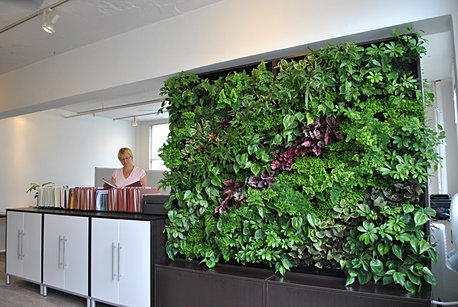 Best Living Walls in San Francisco Green Office Indoor Plants in SF