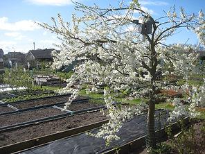 Spring blossom resized.jpg