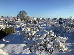 Snow resized.jpg