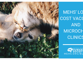 How Your Pets Can Benefit From MEHS' Low-Cost Vaccine and Microchip Clinics