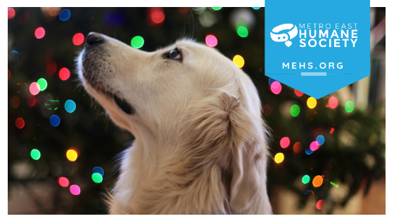 Image shows profile of tan dog looking up. Background is blurred lights from a Christmas tree. Banner in top right corner contains MEHS logo and website.