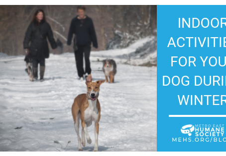 Indoor Activities for Your Dog During Winter