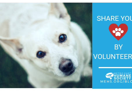 Share your love by volunteering