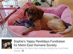 Sophie's Puppy Campaign