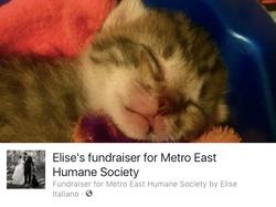 Elise's Foster Fundraiser
