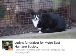 Ledy's Spay/Neuter Cat Campaign