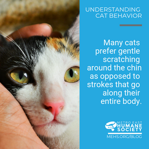 """Image shows cat with head in person's hand. Text on right says, """"Many cats prefer gentle scratching around the chin as opposed to strokes that go along their entire body."""""""