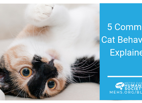 5 Common Cat Behaviors Explained