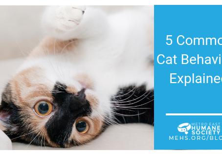 5 Common Cat Behaviors Explained