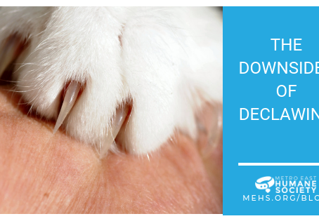 Downsides of Declawing