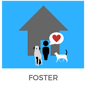 foster.png