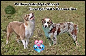 Myla and Boomer Due 21.JPG