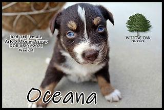 Week 4 OceanaIMG_9067.JPG