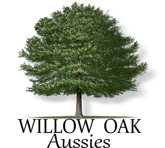 Willow Oak Logo.png