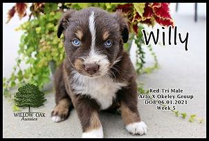 Week 5 WillyIMG_9213.JPG