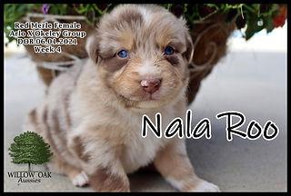 Week 4 Nala RooIMG_9109.JPG