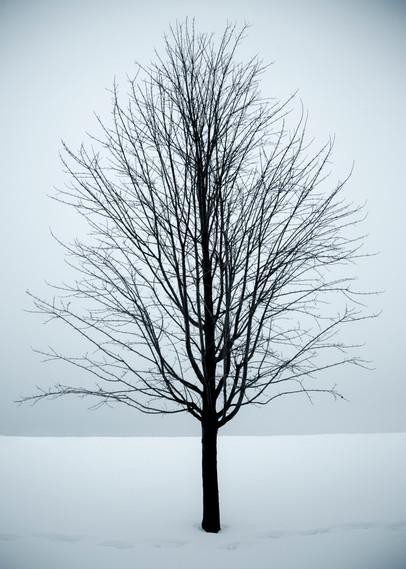 GREY_TREE.jpg