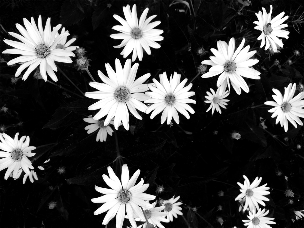 BW_FLOWER-2.png