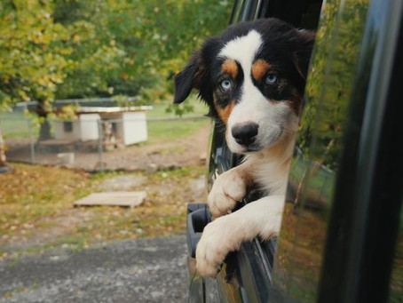 Dog Adoption 101: What You Need to Know