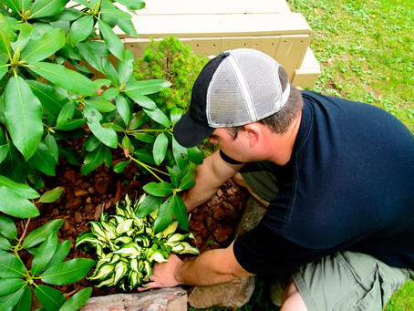 What You Need to Know About the Law Before Starting a Landscaping Company